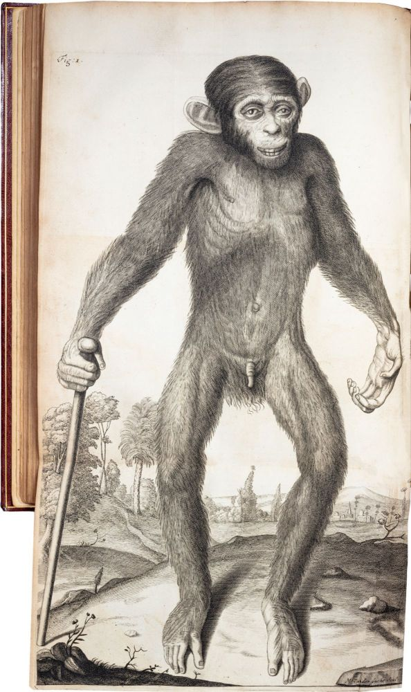 Orang–Outang, sive Homo Sylvestris; or, The Anatomy of a Pygmie. Edward Tyson.