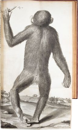 Orang–Outang, sive Homo Sylvestris; or, The Anatomy of a Pygmie
